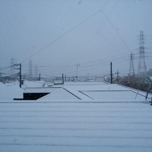 東京は、桜と雪