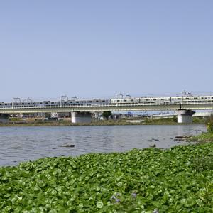多摩川橋梁の小田急8000形+小田急3000形