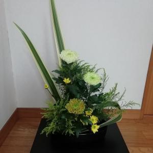 菊とニューサイラン