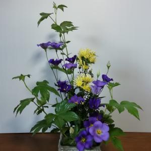 菊とトルコキキョウ