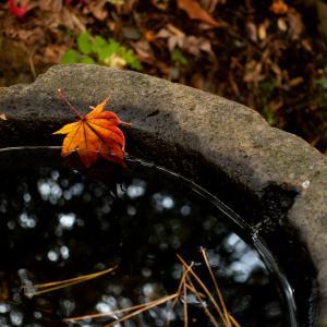 南郷に紅葉を撮りに往く の巻