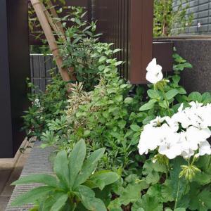アダルティー花壇
