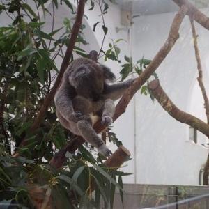 台北動物園に行く!
