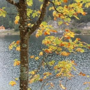 湖畔に黄葉深まる