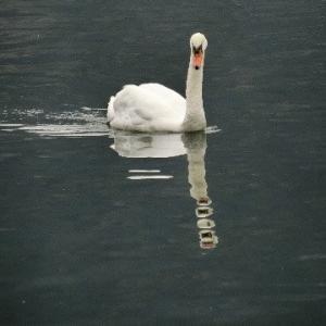 黒き湖(うみ)に白き鳥いて孤ならずや