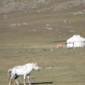 白馬とゲルのみ見ゆる荒野かな