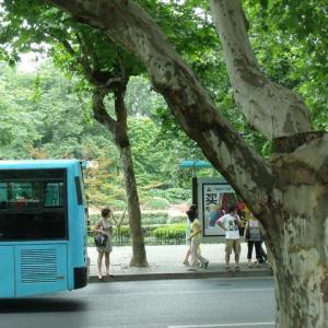 杭州(Hangzhou)の鈴懸並木バスがゆく