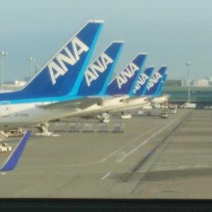【番外✨】早朝の羽田空港✈️