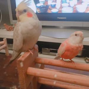 鳥さんみんな元気です