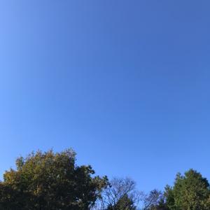 青空がとても綺麗な日曜日でした♡我が家の紅葉も色づき始めましたよ♡