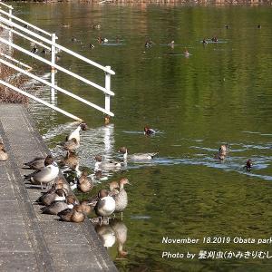2019年11月18日 小幡緑地公園