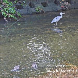 2021年9月23日 朝の山崎川