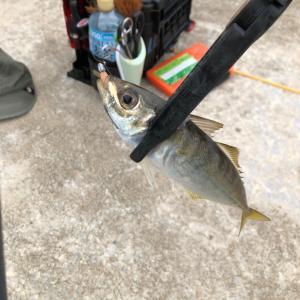 珍しい魚?