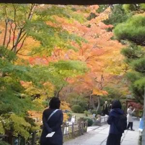 ローファーで秋の松島を散策【1911松島#2】