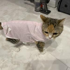 エリザベスカラーよりも術後服?猫ちゃんの避妊・去勢手術後の保護具はどうする?