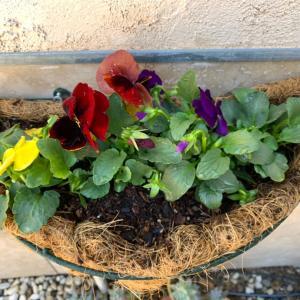 冬の花バスケット
