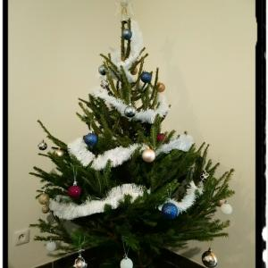 クリスマスツリーは使い捨てに。