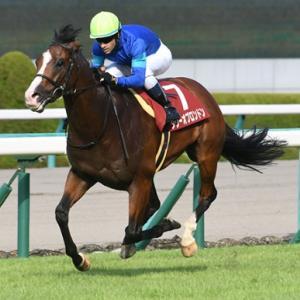 安田記念へ駒を進めるのはどの馬!?マイル王への前哨戦、京王杯スプリングカップ