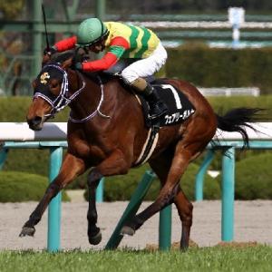 2011年の大波乱の再来なるか?!牝馬限定のハンデ戦!中山牝馬ステークス!