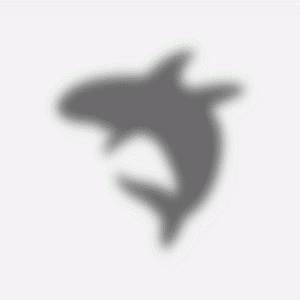 影鰐 ― 人の影を食うサメのような怪魚 ―