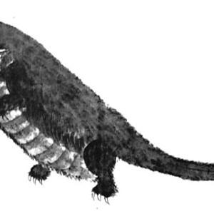 大坂城の怪獣 ― 江戸時代に大坂城の堀に現れた怪獣 ―