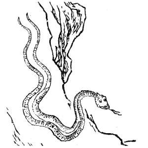 肥遺(ヒイ) ― 中国に伝わる身体が2つに割れた蛇 ―
