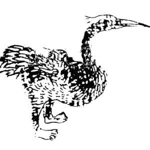 鵹鶘(リコ) ― 中国に伝わるオシドリのような怪鳥 ―