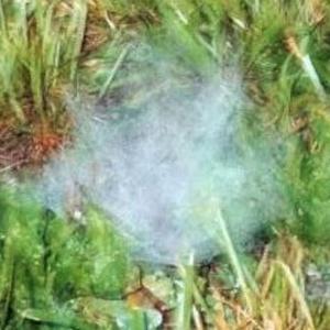 エンゼル・ヘア ― UFOとともに現れる繊維状の謎の物体 ―