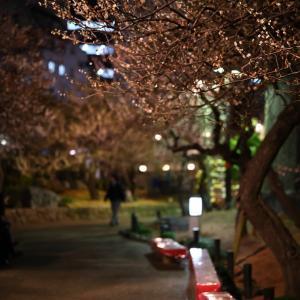 夜の花(梅)見_2020/02/25撮影