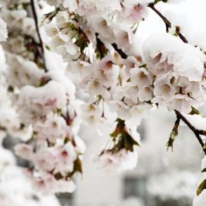 雪景色の公園(2020/03/29撮影)