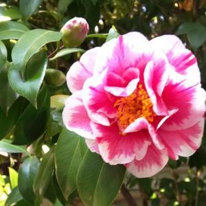3月6日 「世界一周の日」「修二会」①花ごしらえ