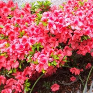 5月26日 「紅花栄」の日・「緑柳花紅」・
