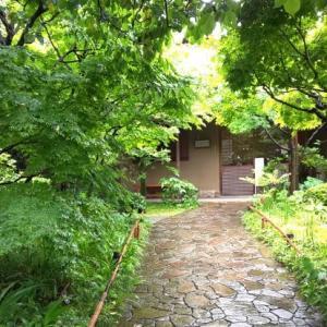 6月11日 「入梅」・「腐草蛍」・「一雨潤千山」・「葉雨」