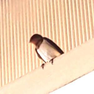 9月18日  「玄鳥去」の日・「燕座」