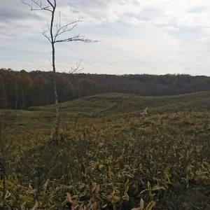 初年度の狩猟と現在の心境と進歩?