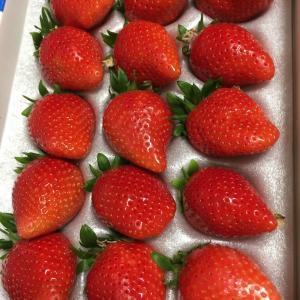 大粒のイチゴです