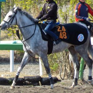 【ナグラーダ】最後の新馬戦でデビューへ