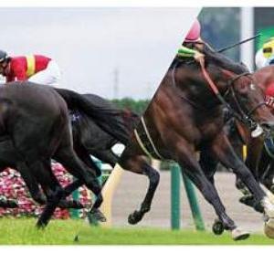 カニコロ厩舎、キャロットクラブ、2021年度 1歳馬のラインナップについて