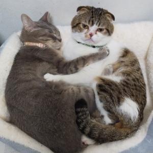 じぃじと猫の攻防