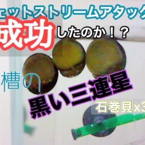 ドム・黒い三連星・石巻貝 好きの為の動画