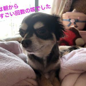 モカのがんばる日記〜僧帽弁膜閉鎖不全症〜