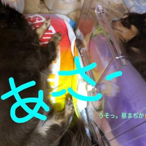 モカ〜肺水腫から4日目〜&ちゃしっぽ