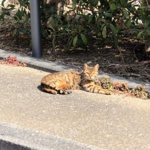 ココアが見つけたよ。猫にゃん。