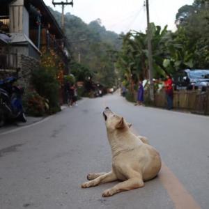 チェンマイの避暑地 「メーカンポーン村」 かかって来なさい!タイランド