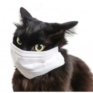 新型コロナウイルス 働く動物達の保証は|かかって来なさい!タイランド