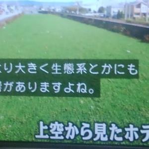 水草が増える前に気づかないのか??