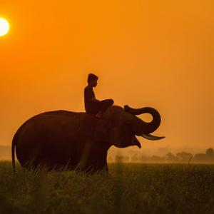 国家資格じゃないケド…ラオスで象使いライセンス獲得!おすすめの観光地とツアーをまとめてみた