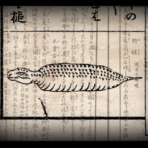 日本のUMA ツチノコ