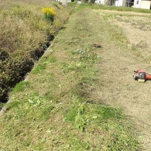 稲刈り後の畦草刈り