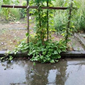 久しぶりの大降りの雨